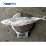 High quality whole pacific mackerel size 300-400g